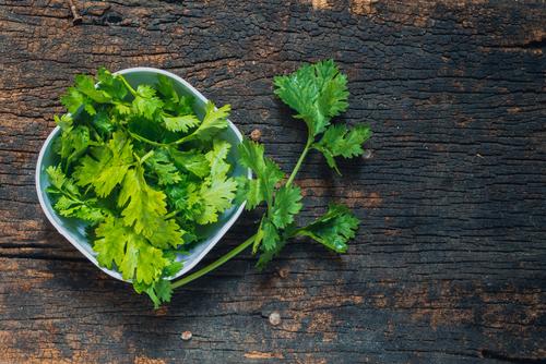 Folhas de coentro ajudam a fazer detox
