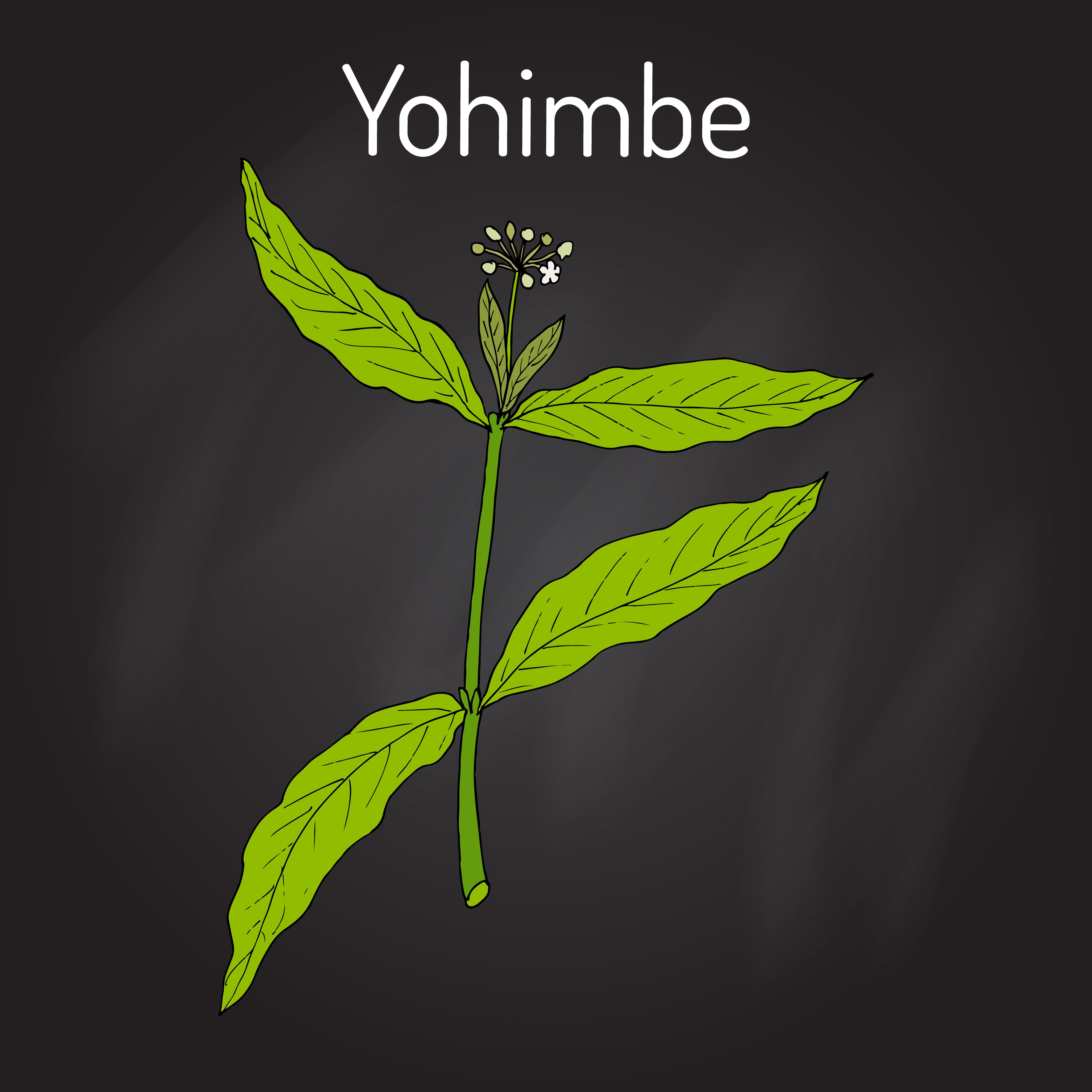 Folha de Ioimbina