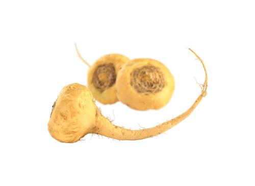 raiz maca peruana