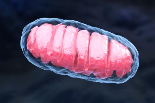 Estrutura da mitocôndria