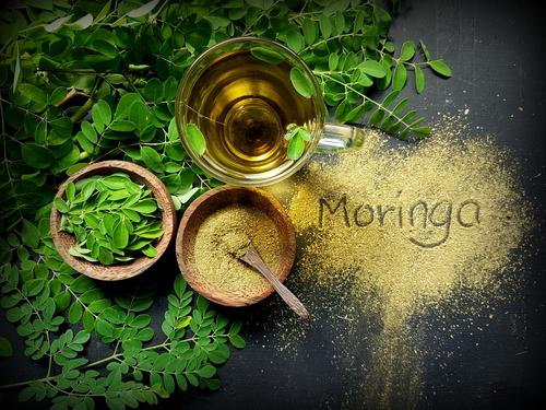 Chá, folhas e farinha de moringa oleifera