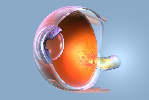Ilustração do olho humano